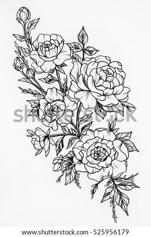 Black White Sketch Three Big Beautiful Stock Illustration 525956179 - Shutterstock