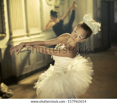 Black and white swan - stock photo