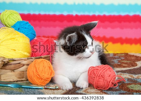 Black and white tabby kitten on carpet floor, bright striped background, balls of yarn in a basket. - stock photo