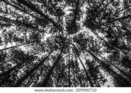black and white trees - stock photo
