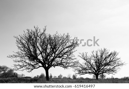 Black and white trees against the sky