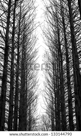 black and white trees silhouettes - stock photo