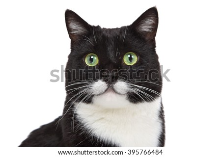 Black and White tuxedo cat with a mustache  - stock photo