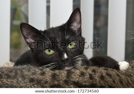 Black and White Tuxedo Laying on Tabby Cat - stock photo