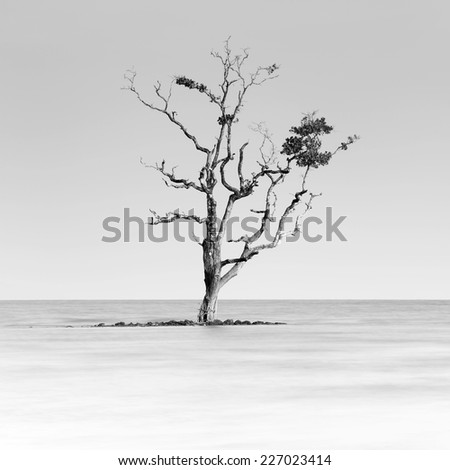 Black and White with lone tree partially submerged in the sea, gulf of Thailand
