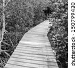 Black and White,Wooden bridge through the mangrove reforestation - stock photo