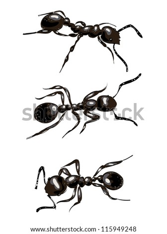 Black ants. Isolated on white background.  Raster version.