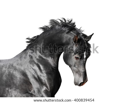 Black arab stallion horse isolated on white background - stock photo