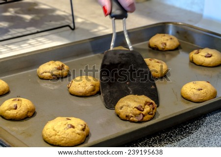 Black baking spatula scooping chocolate chips cookies off of baking pan - stock photo