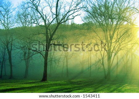 Black barked trees stand alone in the mist of the morning as the sun rises - stock photo