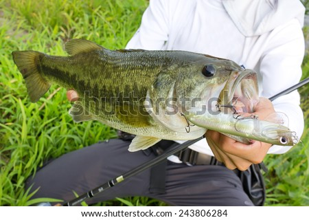 Largemouth Bass Fish Stock Images, Royalty-Free Images ...