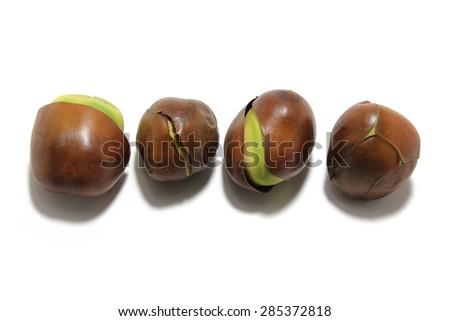 Black Bean Seeds on White Background - stock photo