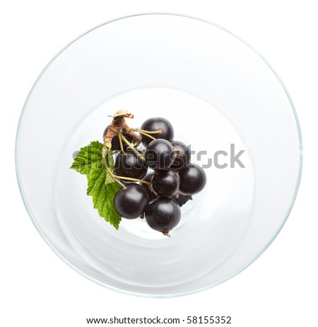 Black berry bunch in vase isolated on white - stock photo