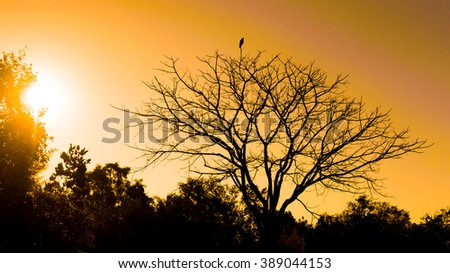Black bird silhouette on bald dead tree in the sunset