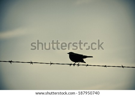 Black bird sitting on barbed wire, filtered for more interesting effect - stock photo