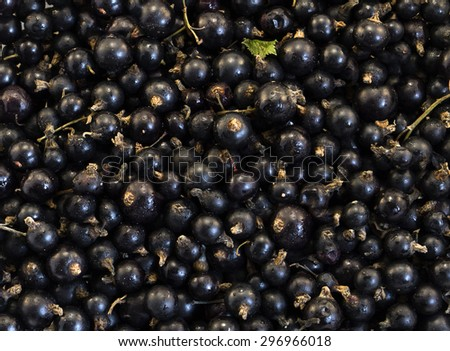 Black blueberries macro background