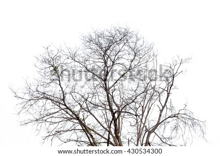 black branches gradient on white background
