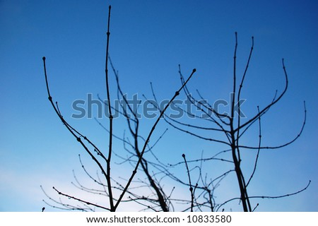 Black branches on blue sky background - stock photo