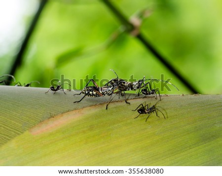 Black bug on bamboo tree.