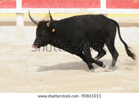 Black bull with bleeding muzzle charging in a bullring - stock photo