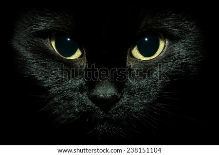 black cat - stock photo