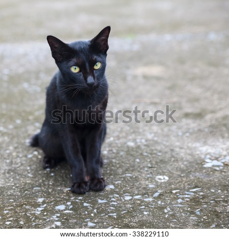 Black cat. - stock photo