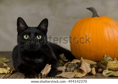 Black Cat As A Symbol Of Halloween With Orange Pumpkin