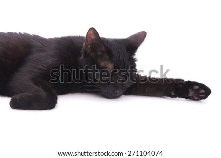 Black cat asleep on white, in a studio - stock photo