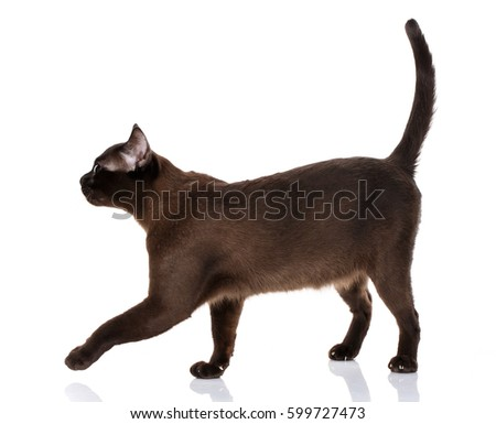 pyrethrin toxicity in cats