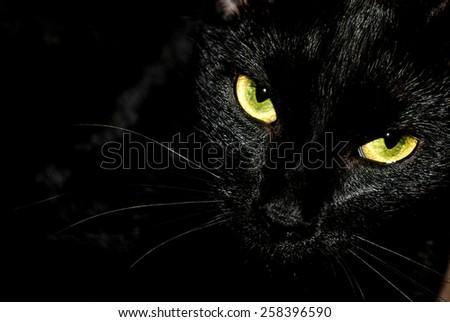 Black cat creepy/sinister face/portrait on black background. - stock photo