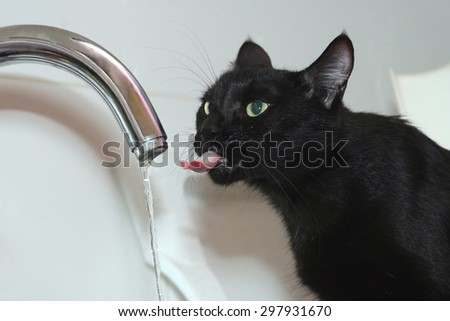 black cat drinks water from the tap  - stock photo