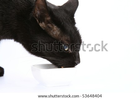 Black cat eating from a bowl on white background - stock photo