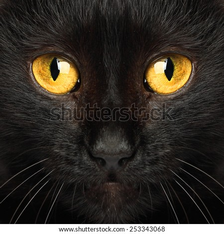 Black cat eyes macro animal background - stock photo