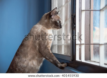 Black Cat feel lonely on window. - stock photo