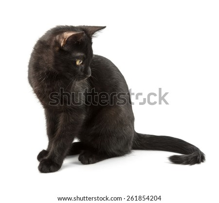black cat going to catch its tail - stock photo