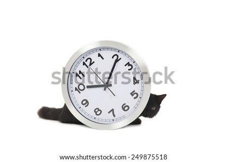 Black cat hiding behind a clock against a white background - stock photo