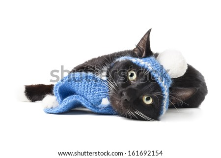 black cat in a winter hat isolated on white background - stock photo