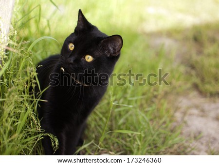black cat in the grass - stock photo