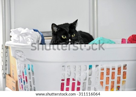 black cat in white laundry basket with clean clothing - stock photo