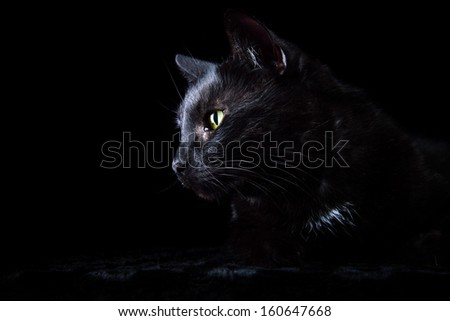 Black cat is isolated on a black background. - stock photo