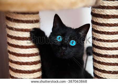 Black cat is playing - stock photo