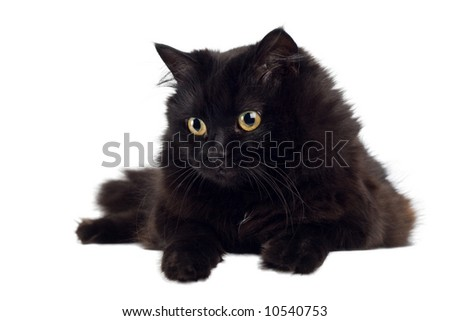black cat isolated - stock photo