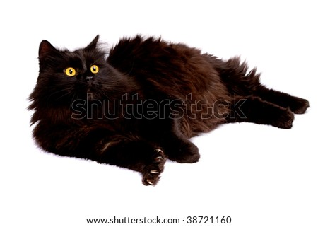Black cat. Isolated on white.