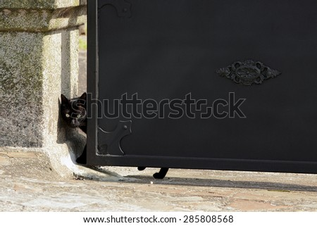 black cat lean out  on the iron garden door
