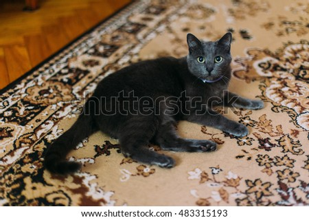 Black cat lies on the carpet with eastern-style patterns at home and resting, looking to camera