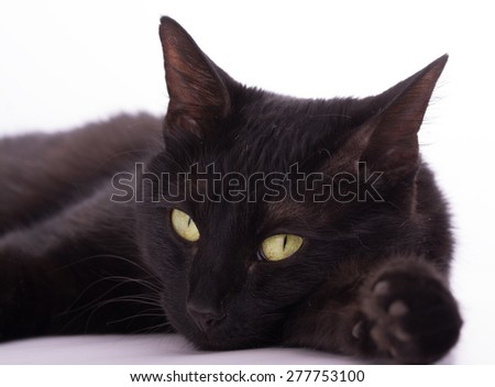 Black cat looking at the viewer, on light background - stock photo