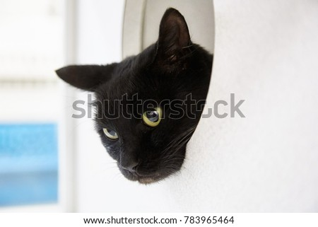 Black cat looking out of window