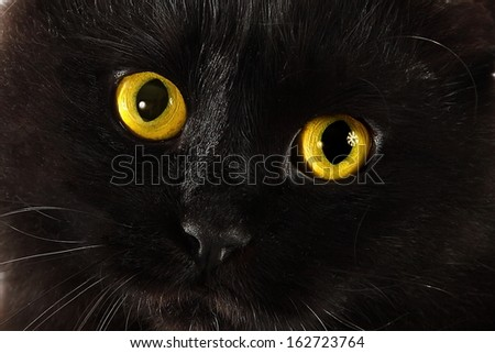 Black cat looking to you with bright yellow eyes - stock photo