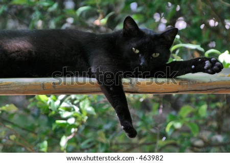 Black Cat lounging on a bench - soft focus - stock photo