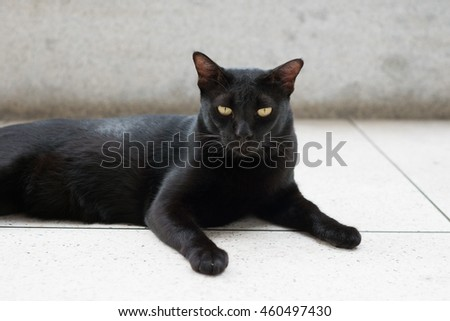 Black cat lying on the floor